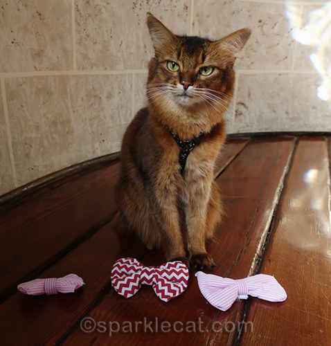 somali cat with new bow ties