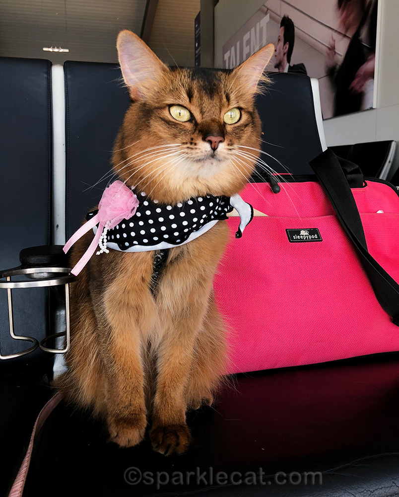 things they don't tell you about flying with your cat