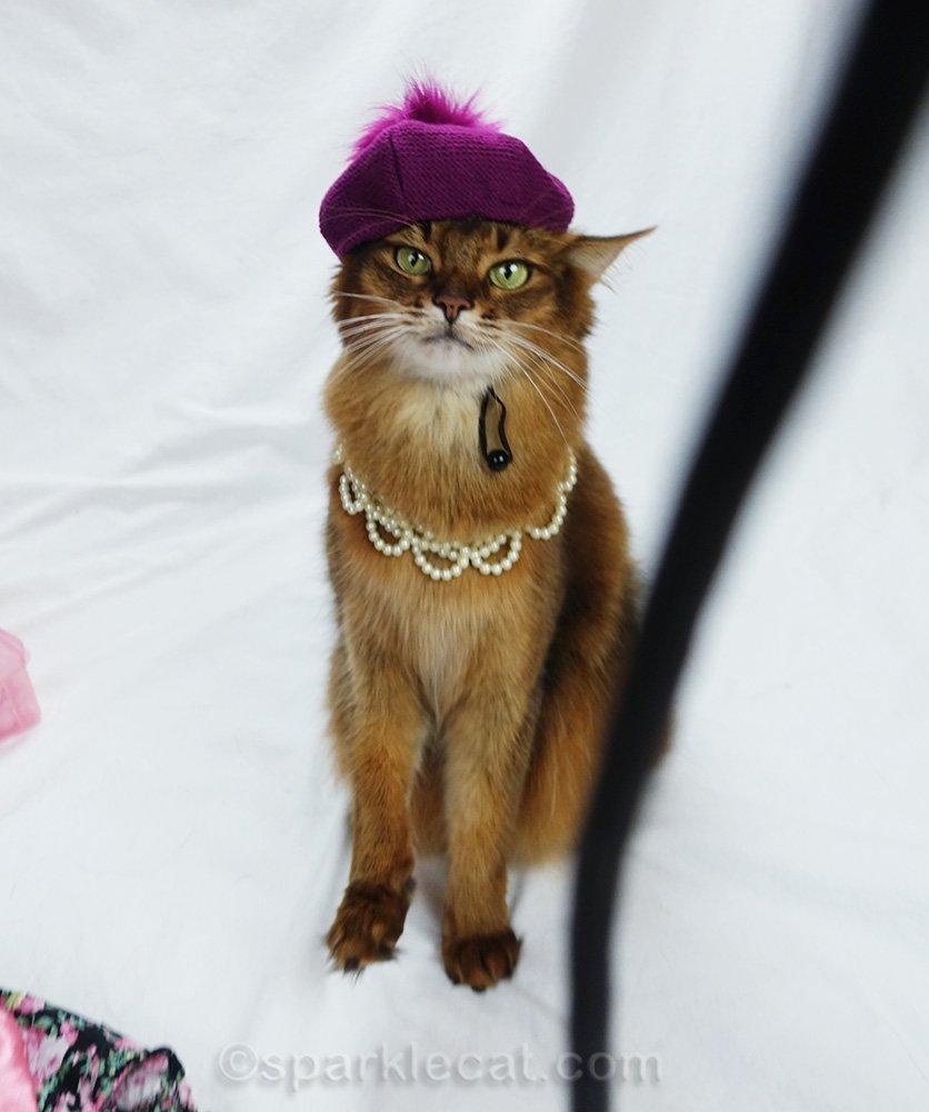 somali cat with camera strap in photo flub