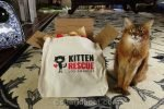 Summer's human's friend drops off the Kitten Rescue VIP Gift Bag for their annual Furball, and she shows what's inside.