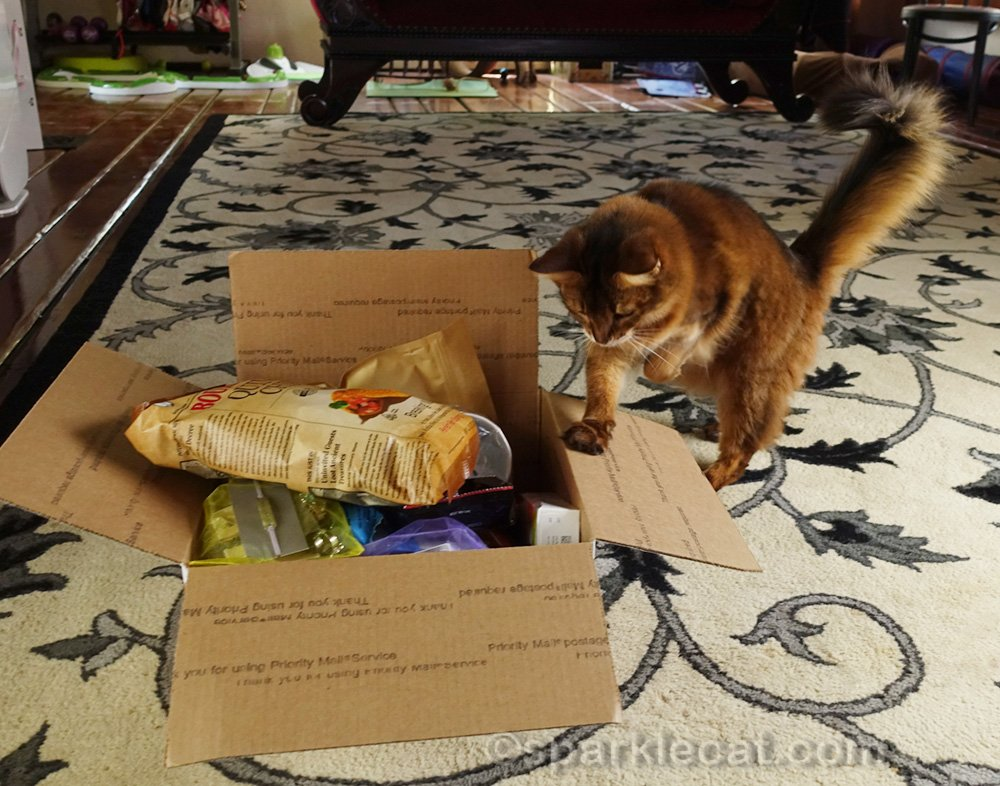 somali cat looking into items from Kitten Rescue VIP gift bag
