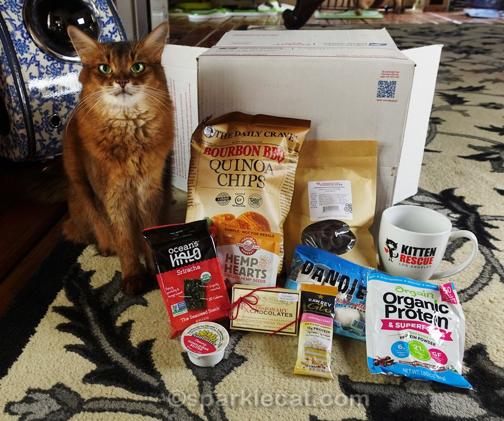 Somali cat with food items from gift bag