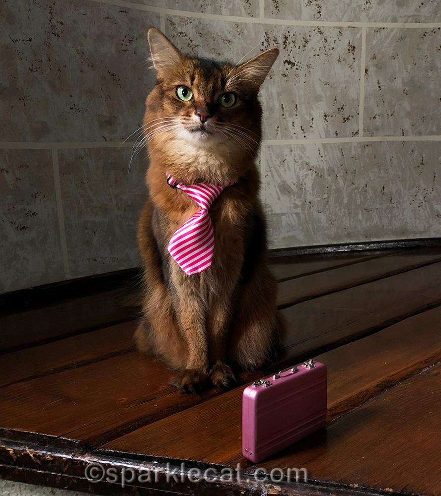 somali cat in necktie, with pink briefcase