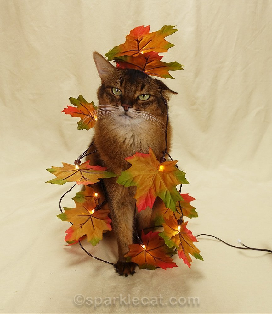 somali cat wrapped in faux fall leaves