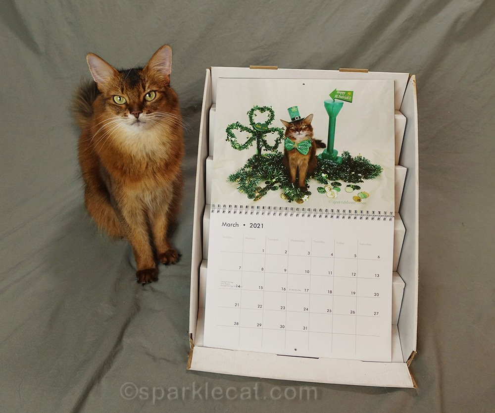 somali cat posing with March page of 2021 calendar