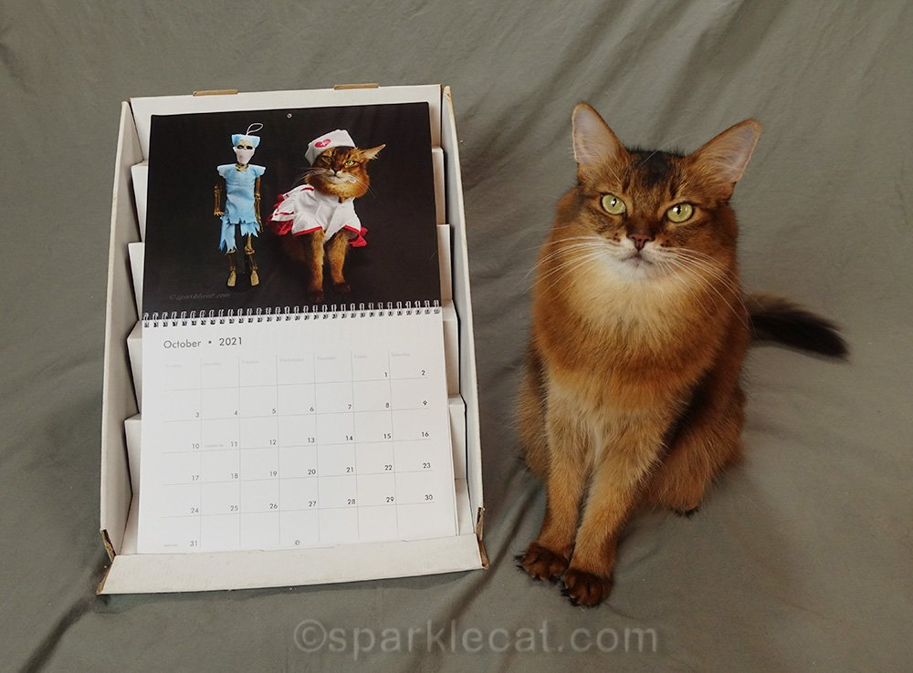 somali cat with October page of her 2021 calendar