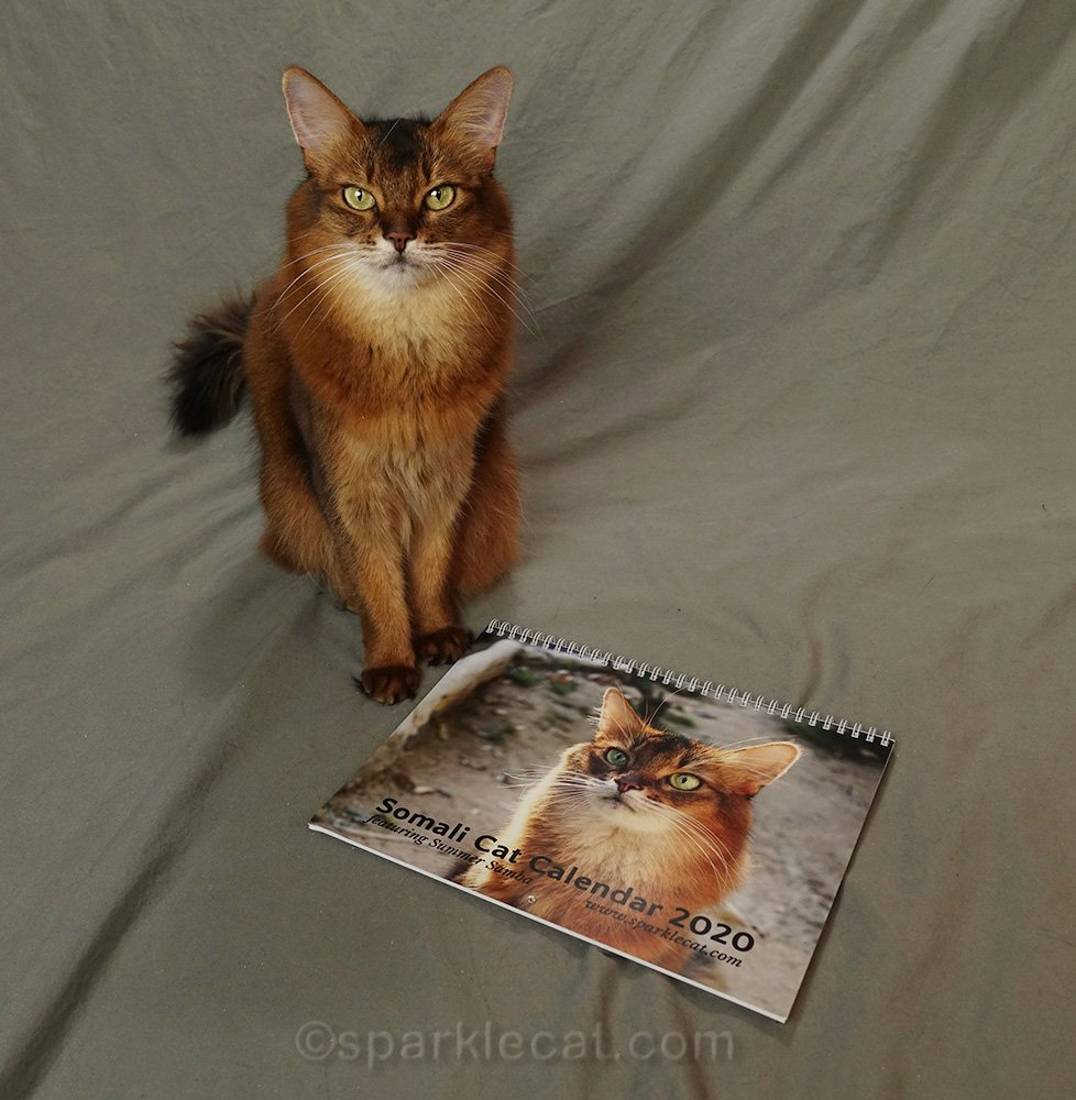 somali cat with bad proof of her 2021 calendar