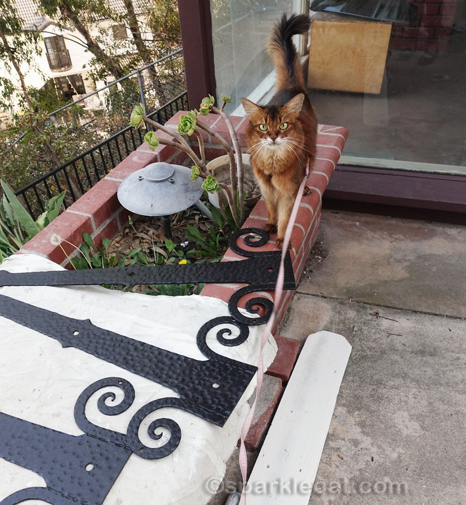 somali cat with freshly painted iron work detail