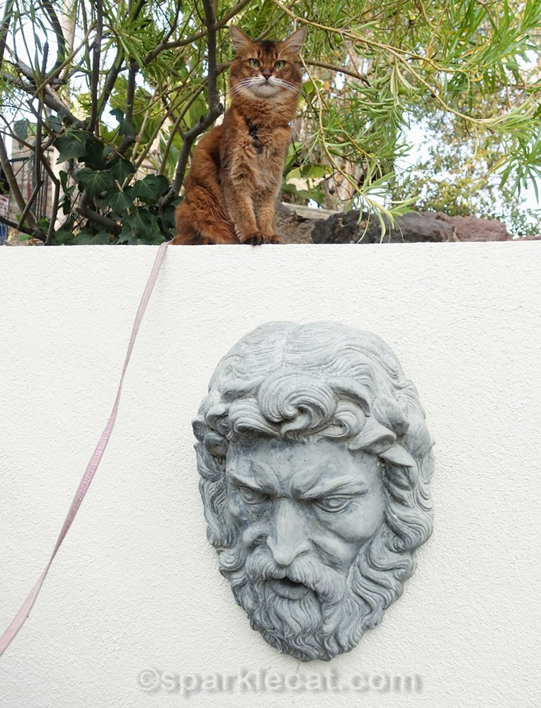 Somali cat on wall above Neptune head sculpture