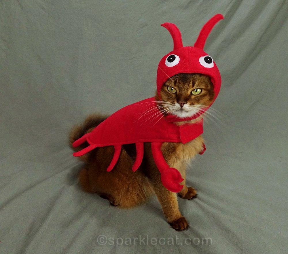 somali cat in red lobster costume