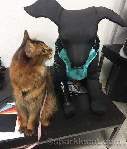 somali cat looking at dog model wearing Clickit harness