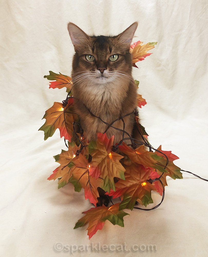 somali cat with garland of fall leaves wound around her