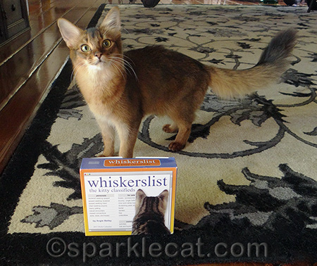 I didn't even know there were kitty classifieds!