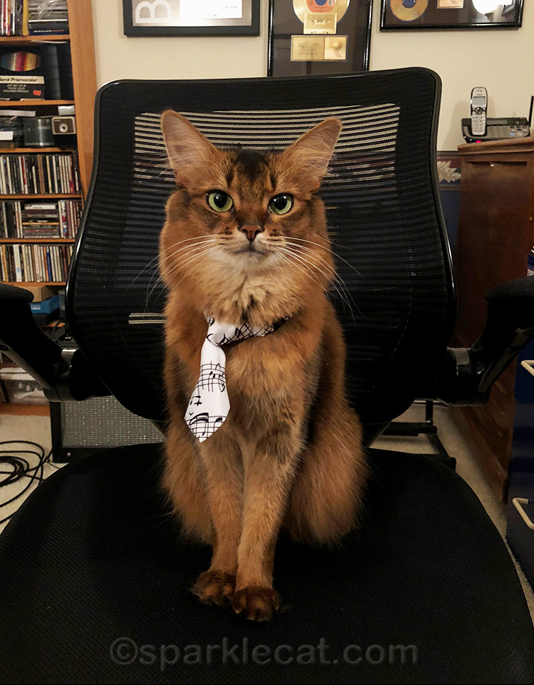 somali cat in music necktie in music room