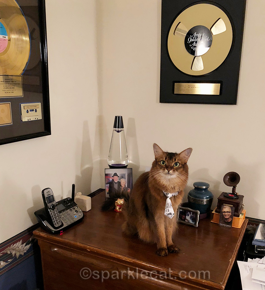 somali cat sitting on leslie cabinet with knickknacks
