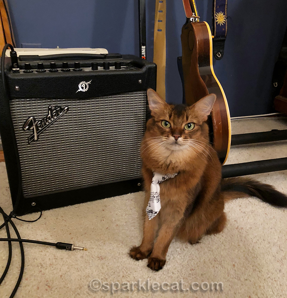 somali cat in music tie, posing with guitar and small fender amp