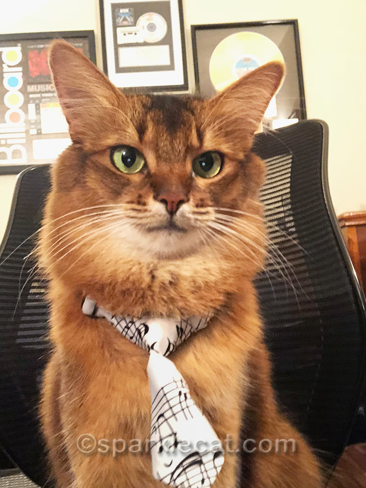 somali cat selfie wearing music tie