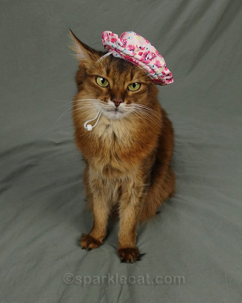somali cat wearing very ugly sun hat