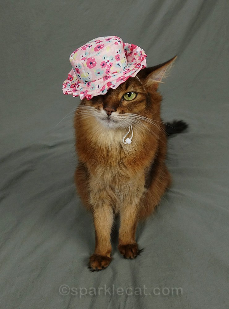 somali cat wearing sun hat over one ear and one eye