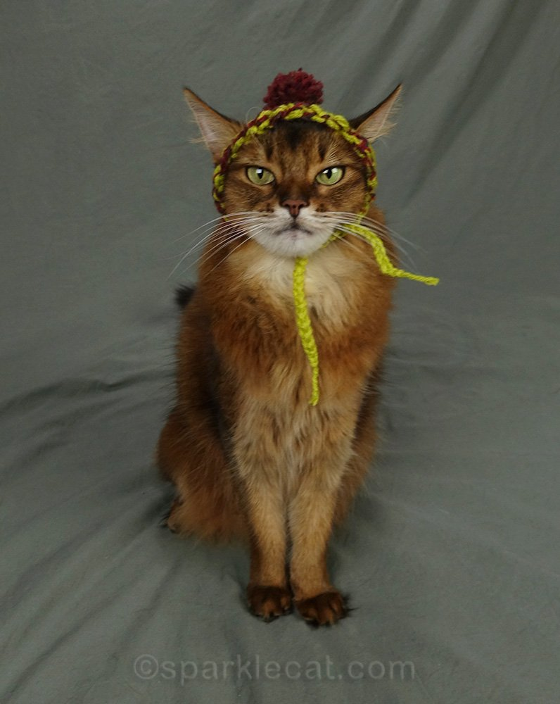 somali cat with chullo hat