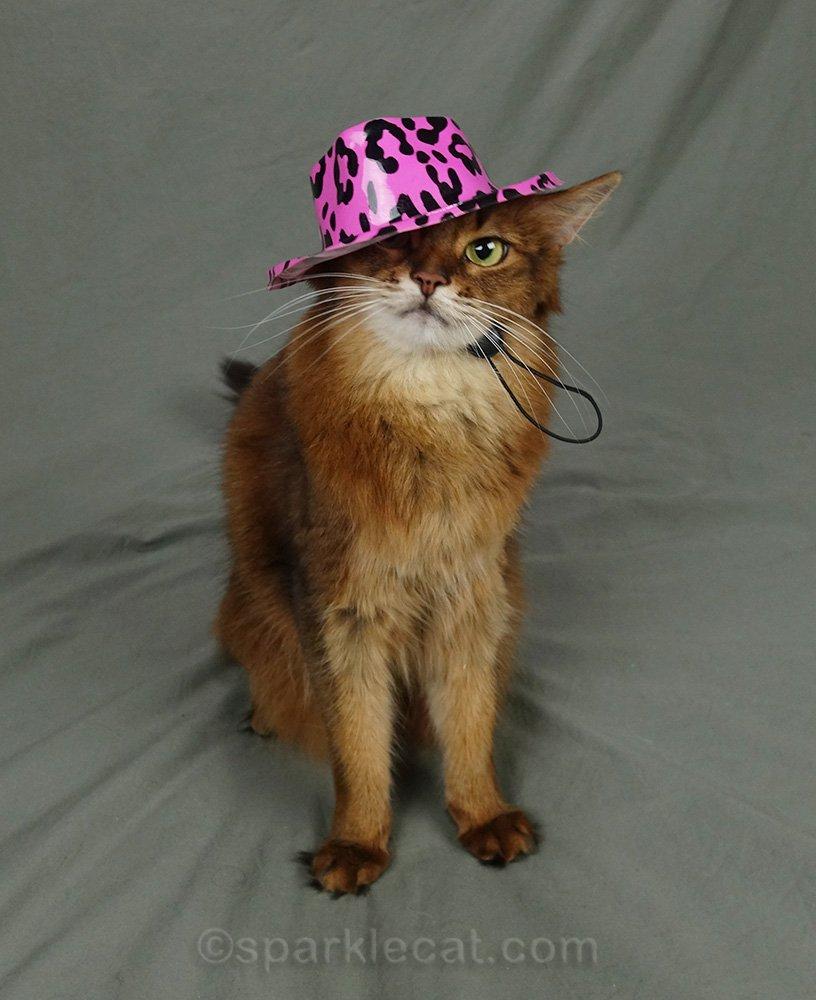 somali cat wearing pink leopard 80s fedora