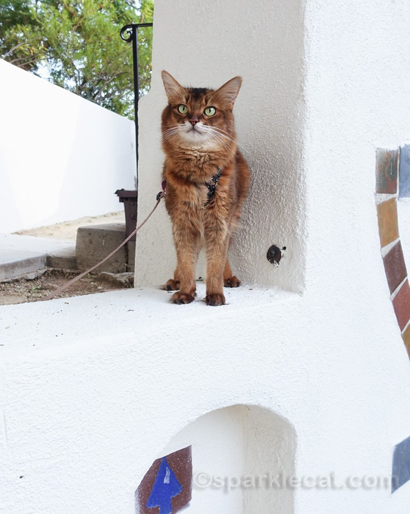 somali cat sitting on ledge by outdoor chimney