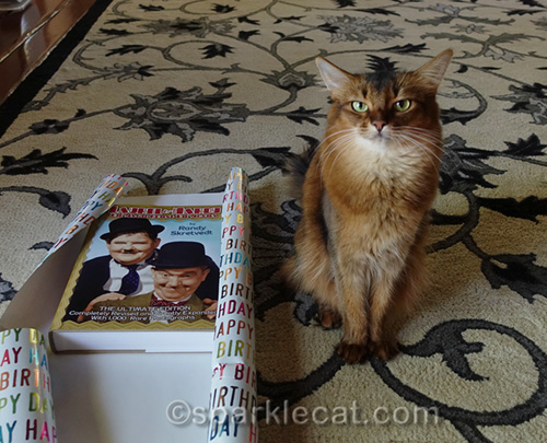 somali cat supervising gift wrapping