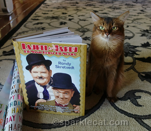 somali cat posing with Laurel and Hardy book