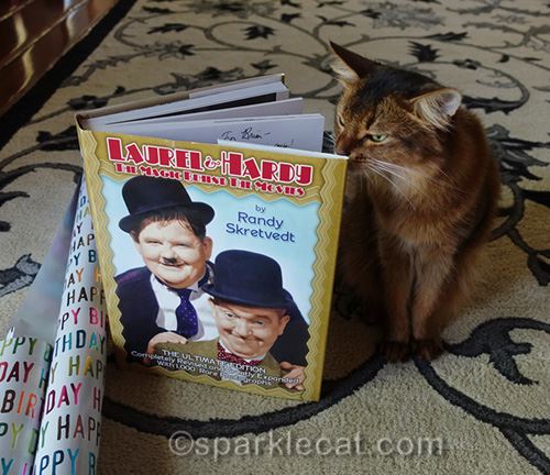 somali cat looking inside Laurel and Hardy book