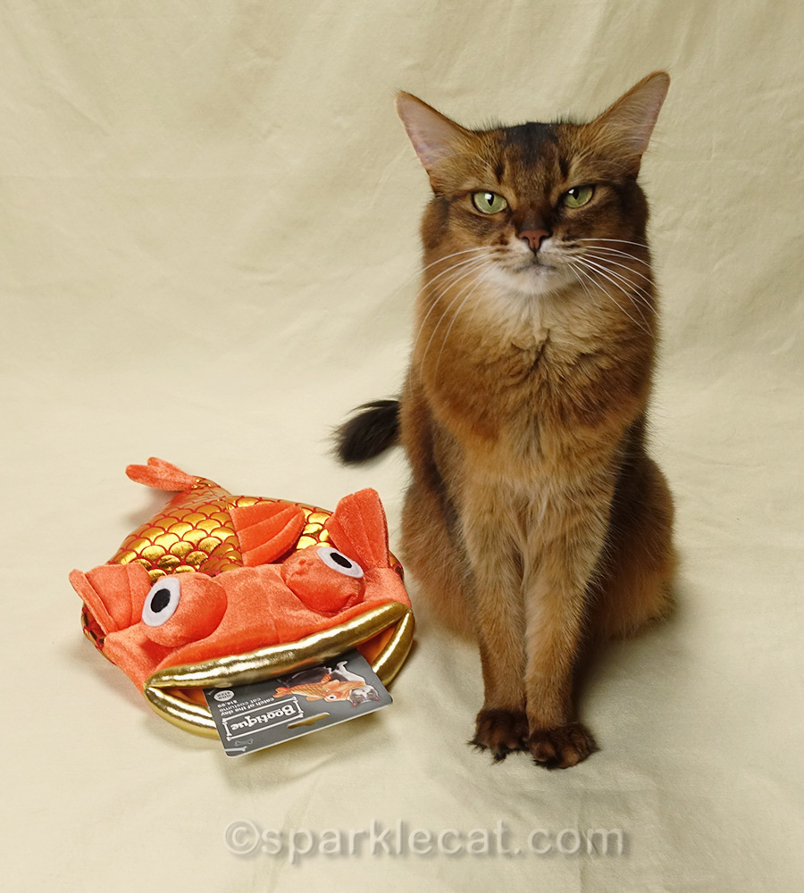somali cat with fishy costume