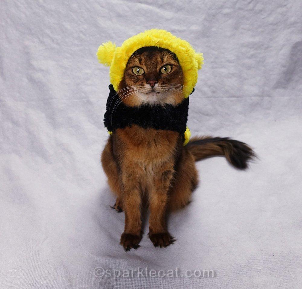 somali cat in dumb bee costume