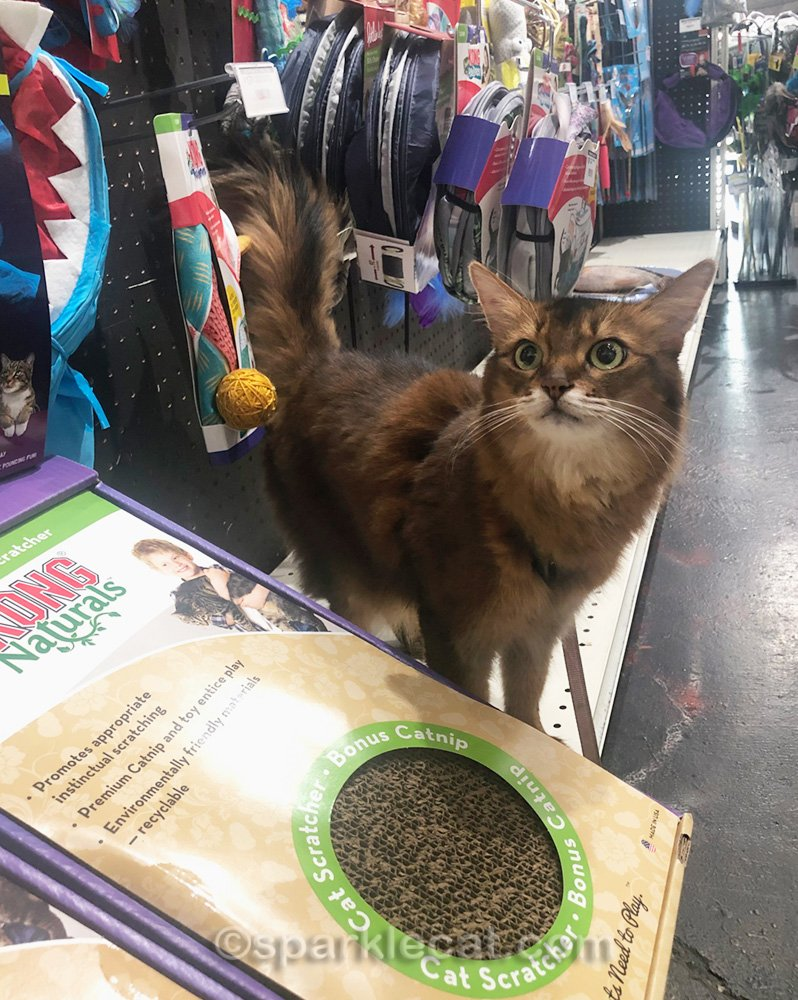 Summer does some browsing during her pet shop visit.