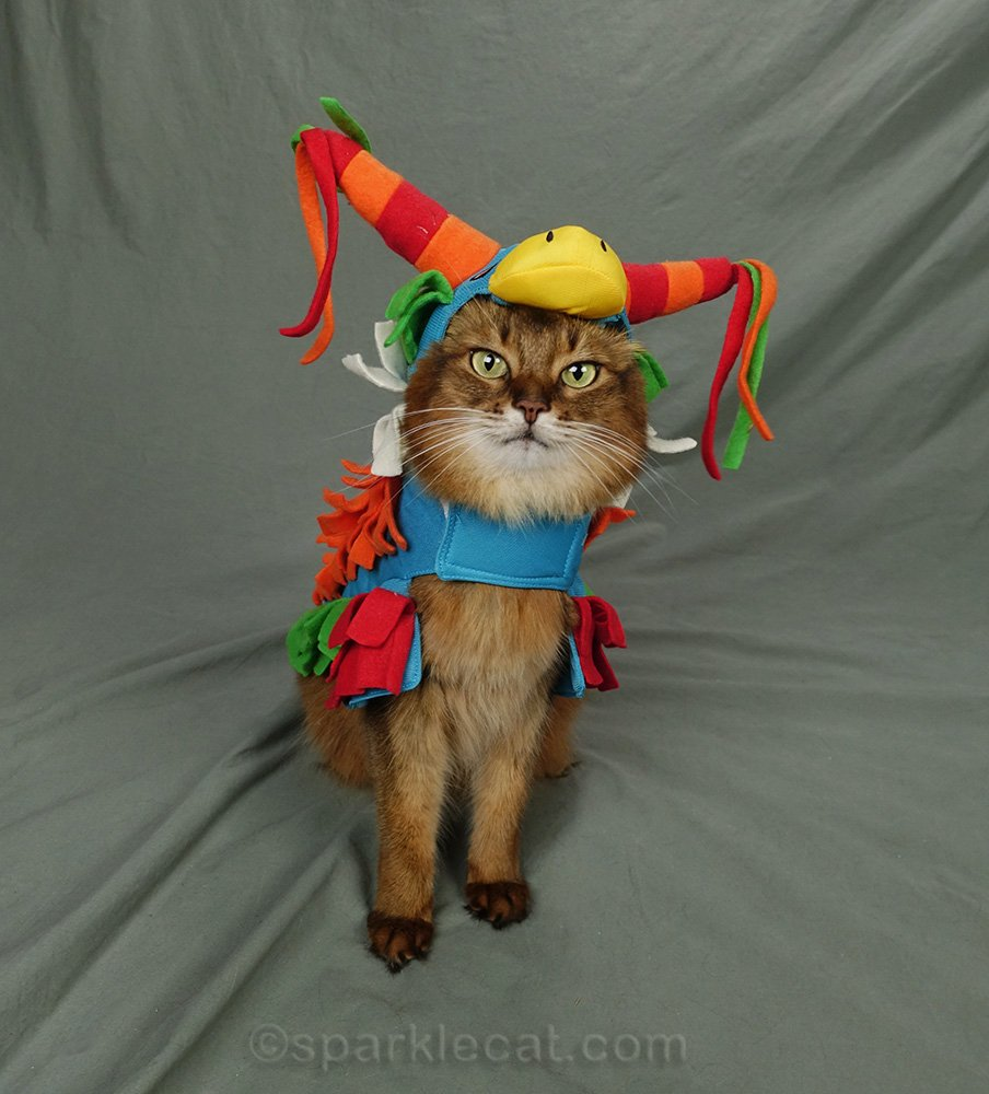 somali cat wearing donkey piñata costume