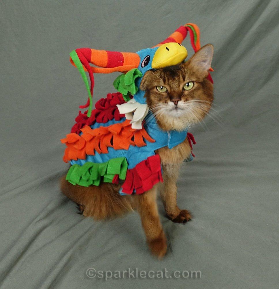 side view of somali cat wearing donkey piñata costume