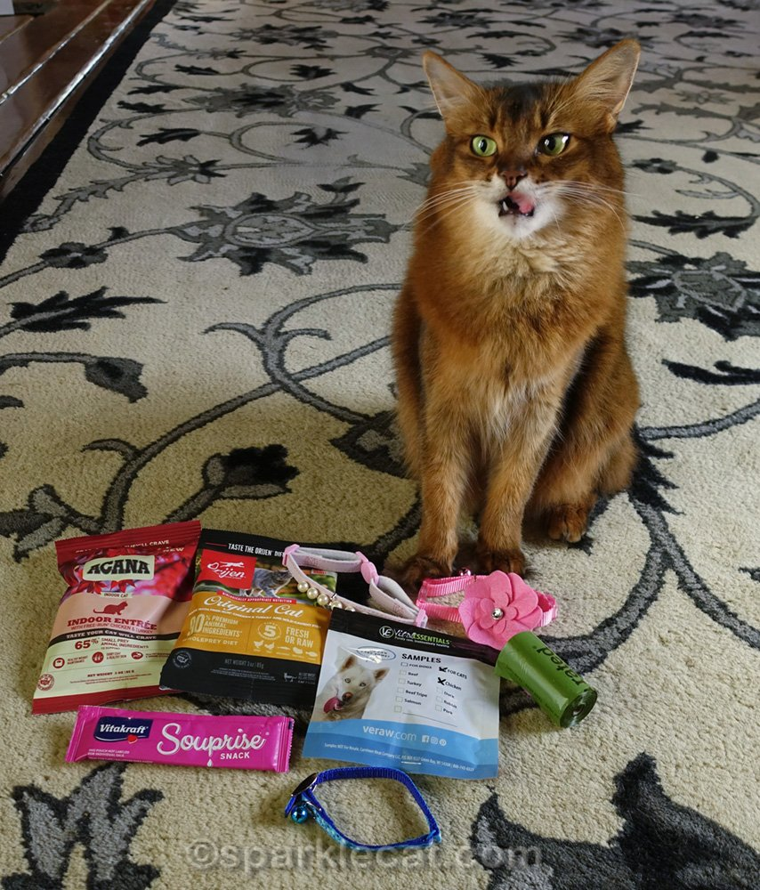 Somali cat making a funny face with Kitten Rescue VIP swag