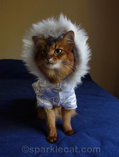 somali cat in faux fur hoodie jacket