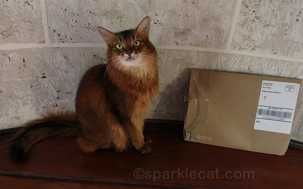 Somali cat with damaged Dazzle package