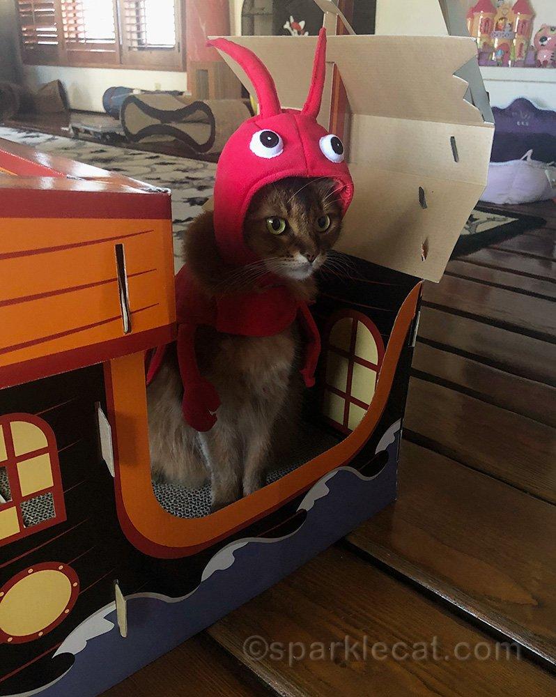 Somali cat in lobster costume in pirate ship scratcher