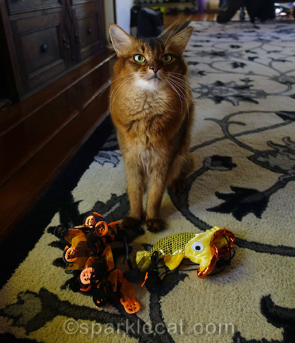 somali cat not happy with Halloween headwear
