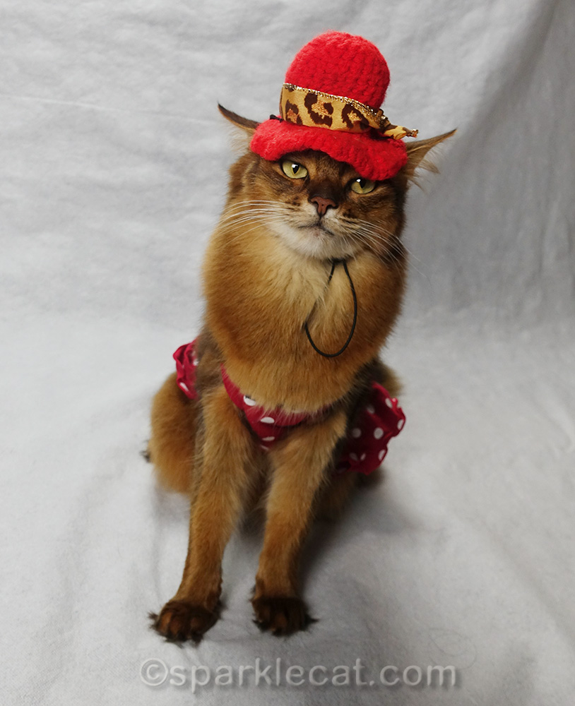 somali cat awkwardly wearing red crocheted hat