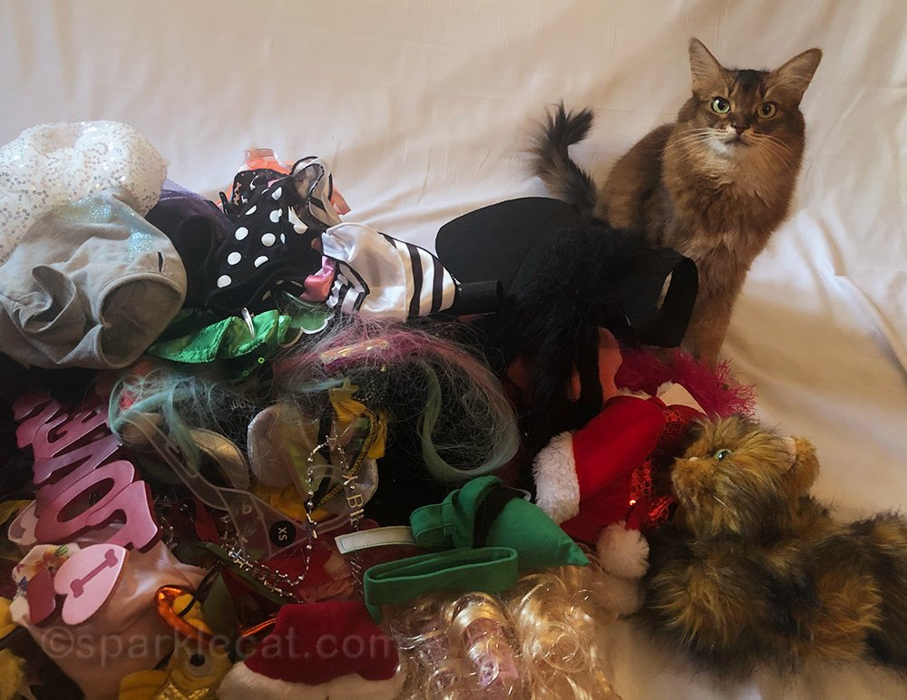Summer's photo studio is a disaster, and she needs help getting it straightened up.