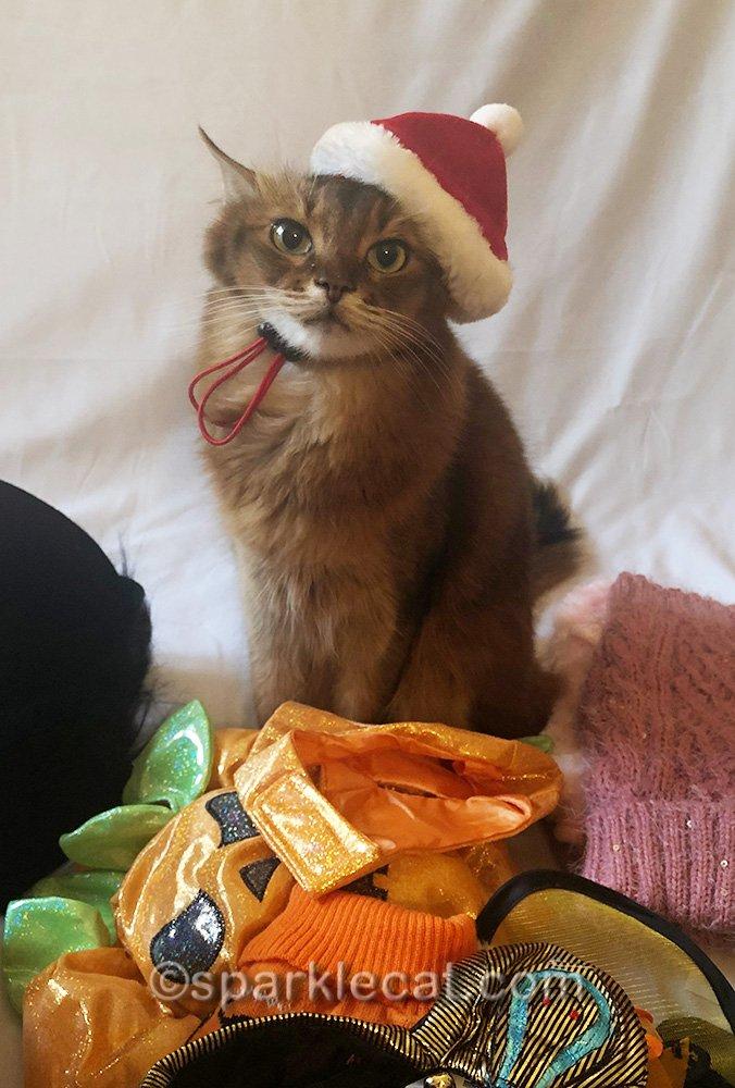 somali cat wearing Santa hat
