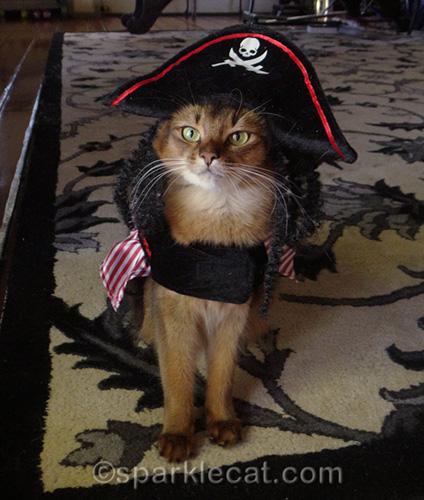 somali cat in pirate costume