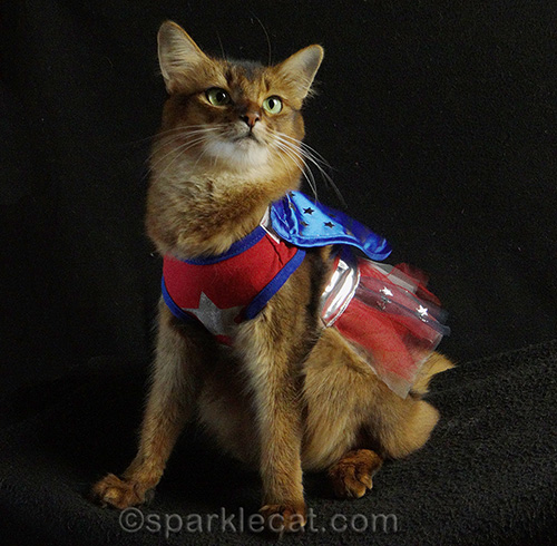 How to Get Your Cat to Wear a Halloween Costume