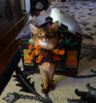 Halloween Haunted House Scratcher Giveaway