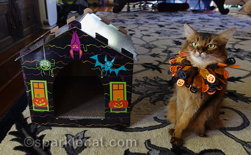 somali cat sitting next to haunted house scratcher