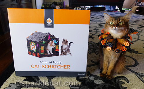 somali cat sitting next to unopened haunted house scratcher