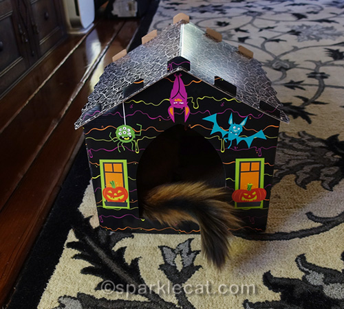 somali cat tail sticking out of haunted house scratcher