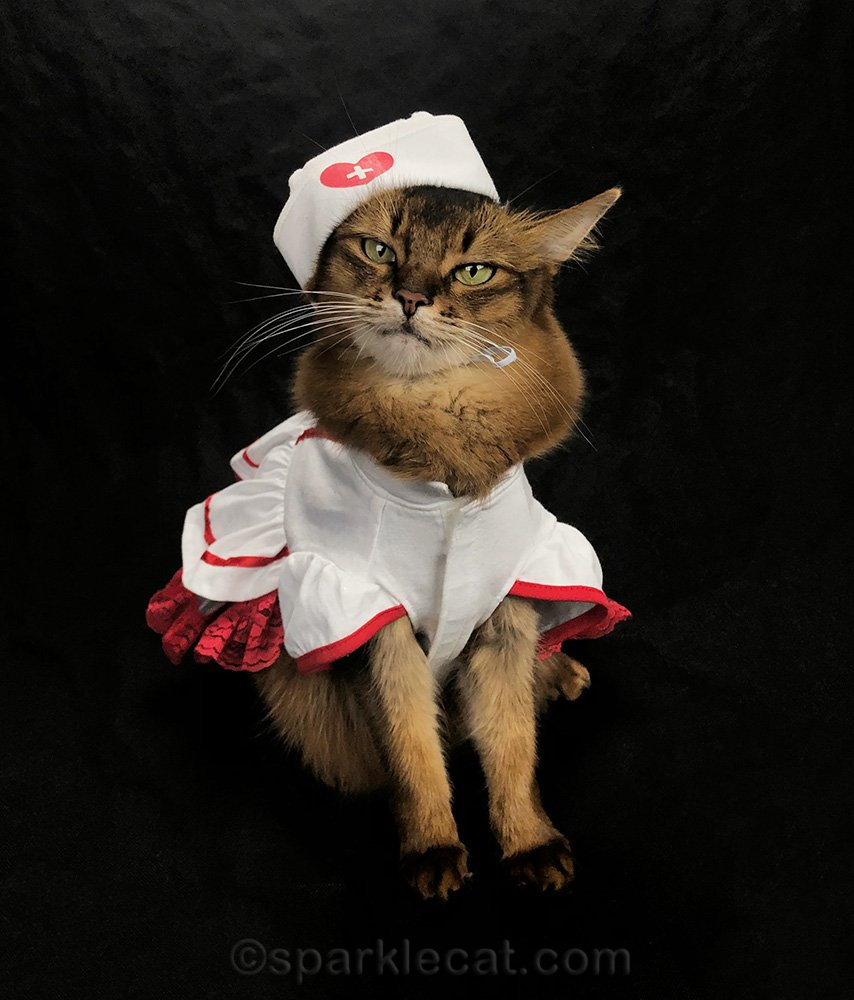 somali cat in nurse kitty outfit