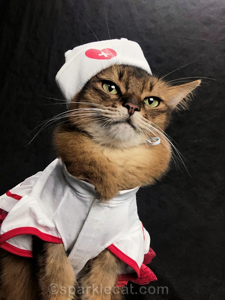 nurse cat selfies